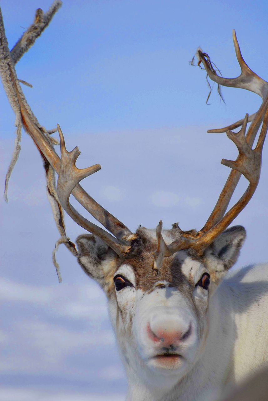 Why is Rudolph's nose red? | The Incidental Economist