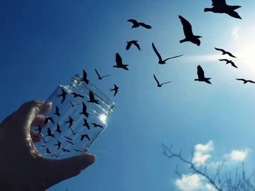 birds in jar