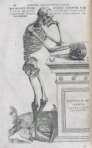 Illustration by Andreas Vesalius, 1543.